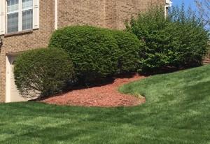 Areas Often Overlooked In Landscaping Design